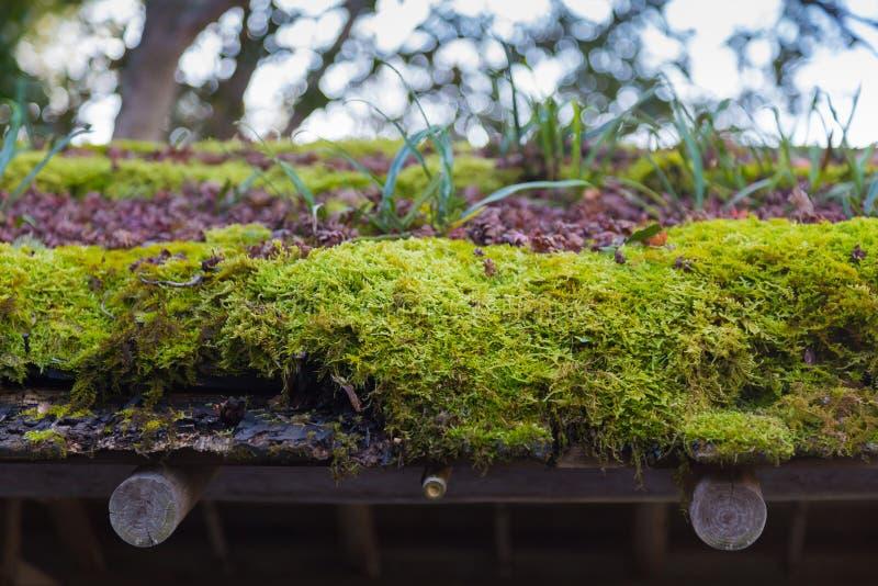 Tetto verde del muschio fotografia stock libera da diritti
