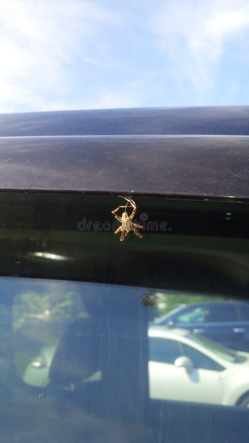 Tettoia del ragno fotografie stock libere da diritti