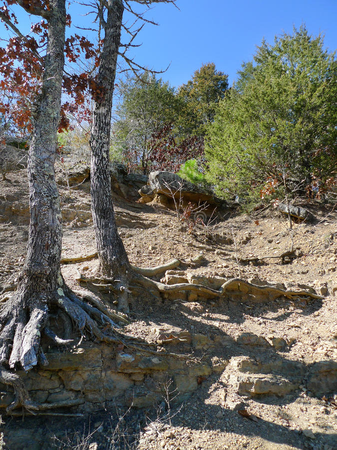 Teufel ` s Den State Park, Arkansas-Zedernbäume und Felsen stockbild