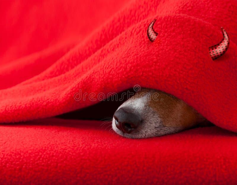 Teufelhund, der für Halloween schläft lizenzfreie stockfotos