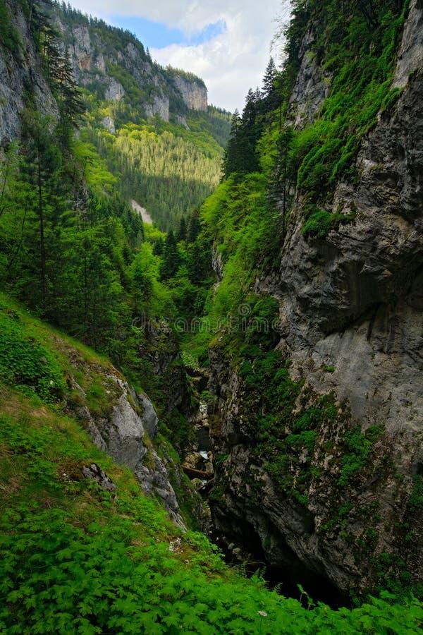 Teufelkehle- Höhle oder Dyavolsko Garlo, Bulgarien, West-Rhodopes Sommertag in Bulgarien Fluss-Landschaft mit grünen Hügeln Tr lizenzfreies stockbild