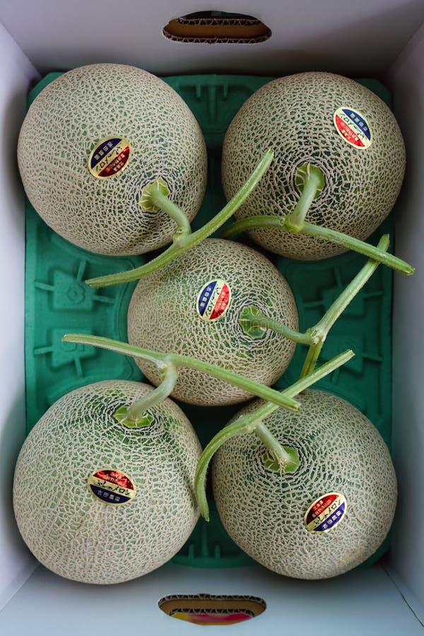 Teure Blatthonigmelonen in Hokkaido, Japan lizenzfreies stockfoto