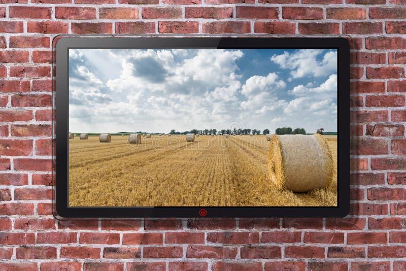 Tevê de Smart com campo e Straw Bales Wallpaper de trigo imagem de stock
