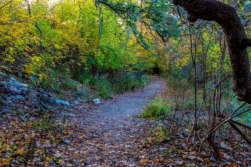 Texas Autumn Trail in the Woods. stock image