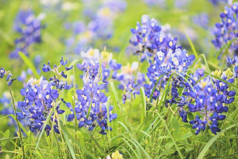 Texas Blue royalty-vrije stock foto's