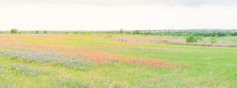 Texas Bluebonnet et le pinceau indien fleurissent dans le Texas rural, U photographie stock libre de droits