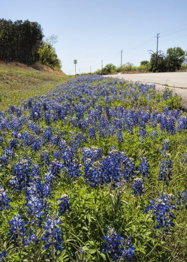 Texas Bluebonnet Wildflower Roadside Landscape fotografía de archivo