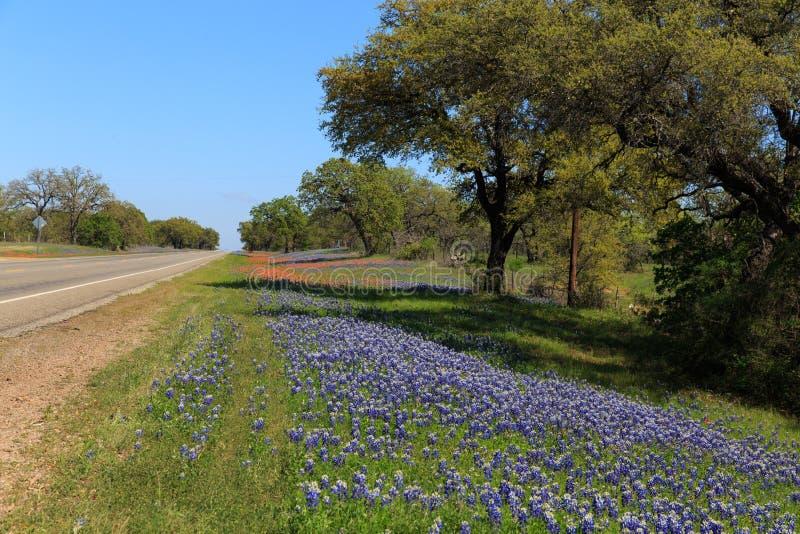 Texas Bluebonnets Roadside imagenes de archivo