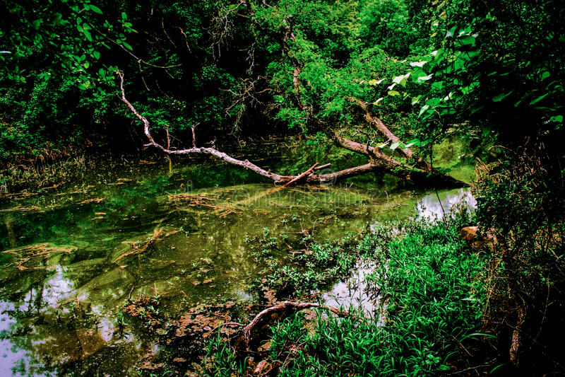 Texas Creek imagens de stock
