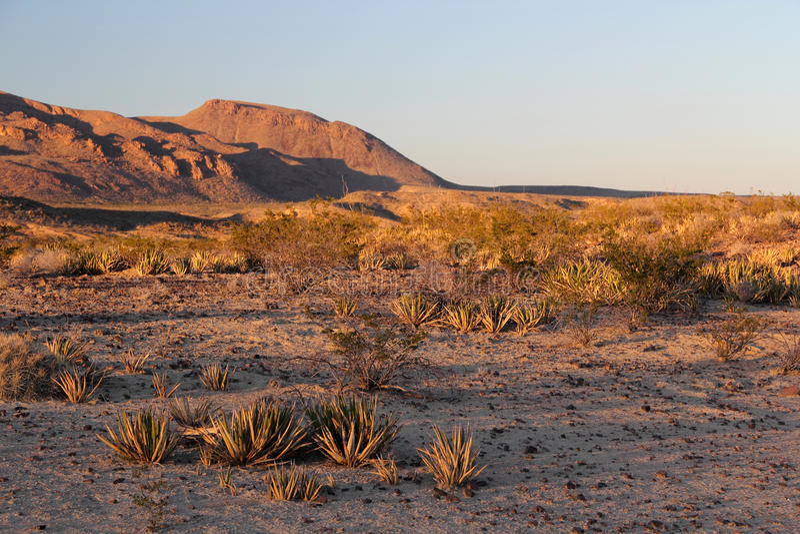 Texas Desert arkivfoton