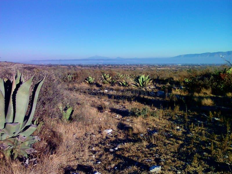 Texas Desert image stock