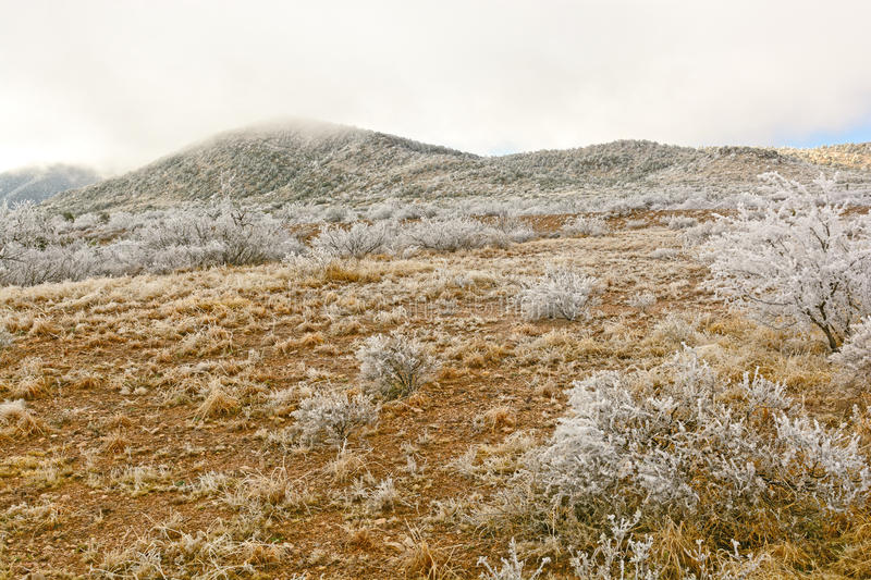 Texas Desert after an Ice Storm. Desert after an Ice Storm near Alpine, Texas stock photography