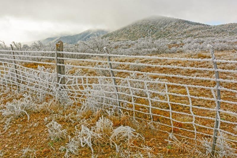 Texas Desert in una tempesta di ghiaccio di inverno immagini stock