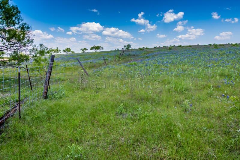 Texas Field Covered com Texas Bluebonnets famoso foto de stock royalty free