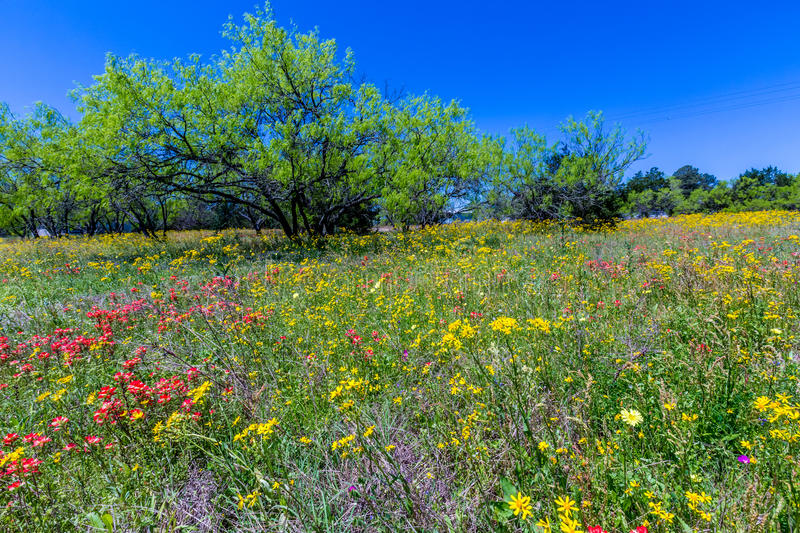 A Texas Field Full of a Variety of Beautiful Wildflowers stock photo