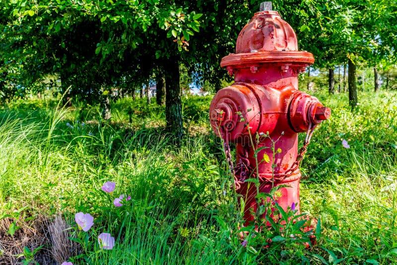 Texas Fire Hydrant vermelho com Texas Wildflowers na primavera imagens de stock