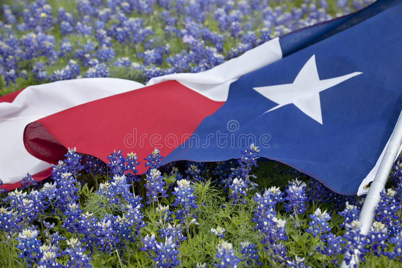 Texas flag among bluebonnet flowers on bright spring day. Low angle view of a Texas flags laying among bluebonnet flowers on a bright spring day in the Texas stock photos