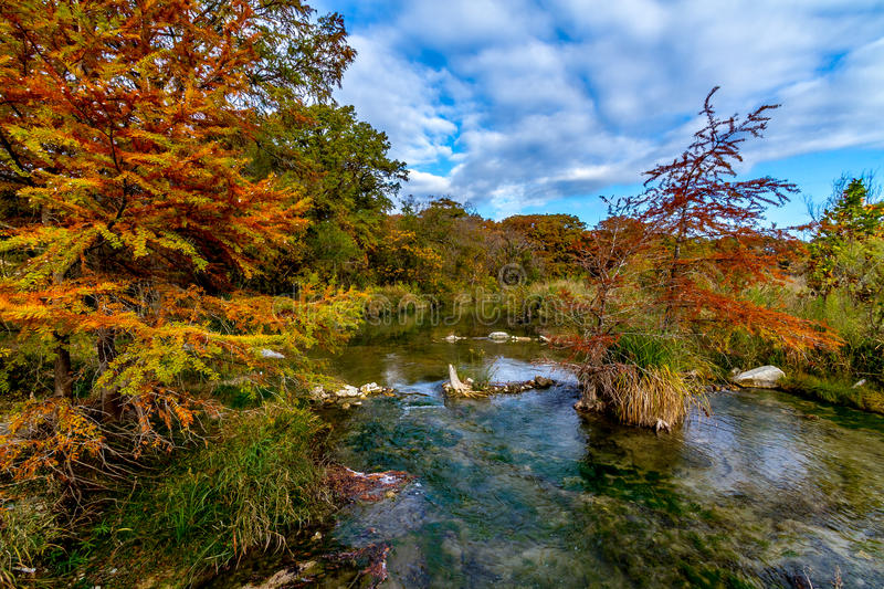 Texas Foliage Bursting with Color Surrounding a Cr. Large Cypress Trees with Stunning Fall Color Lining a Crystal Clear Texas Hill Country Stream royalty free stock image