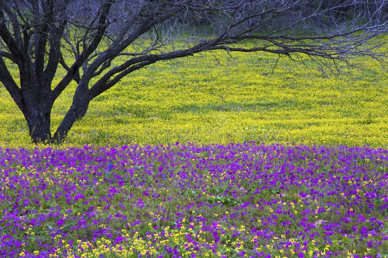 Texas Hill Country in Colorful Spring Bloom stock image