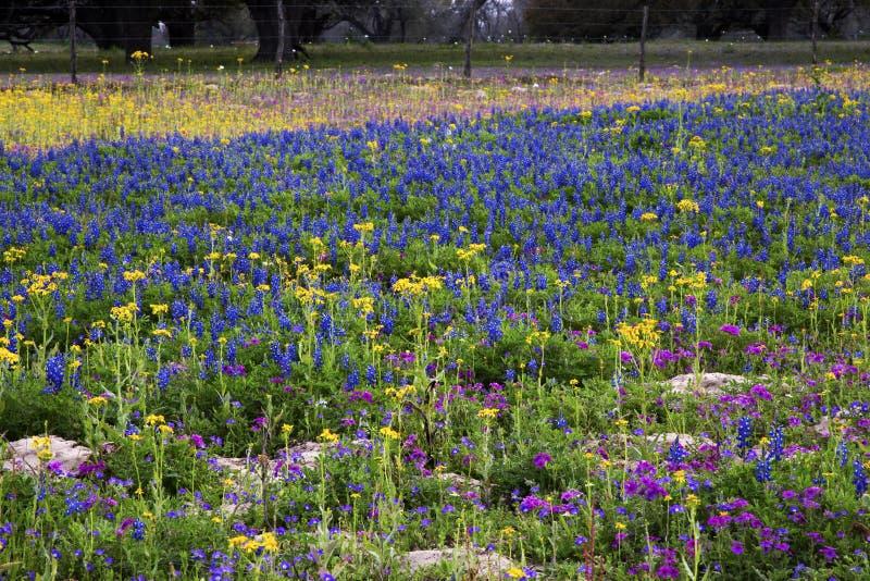 Texas Hill Country i färgrik vårblom royaltyfri bild