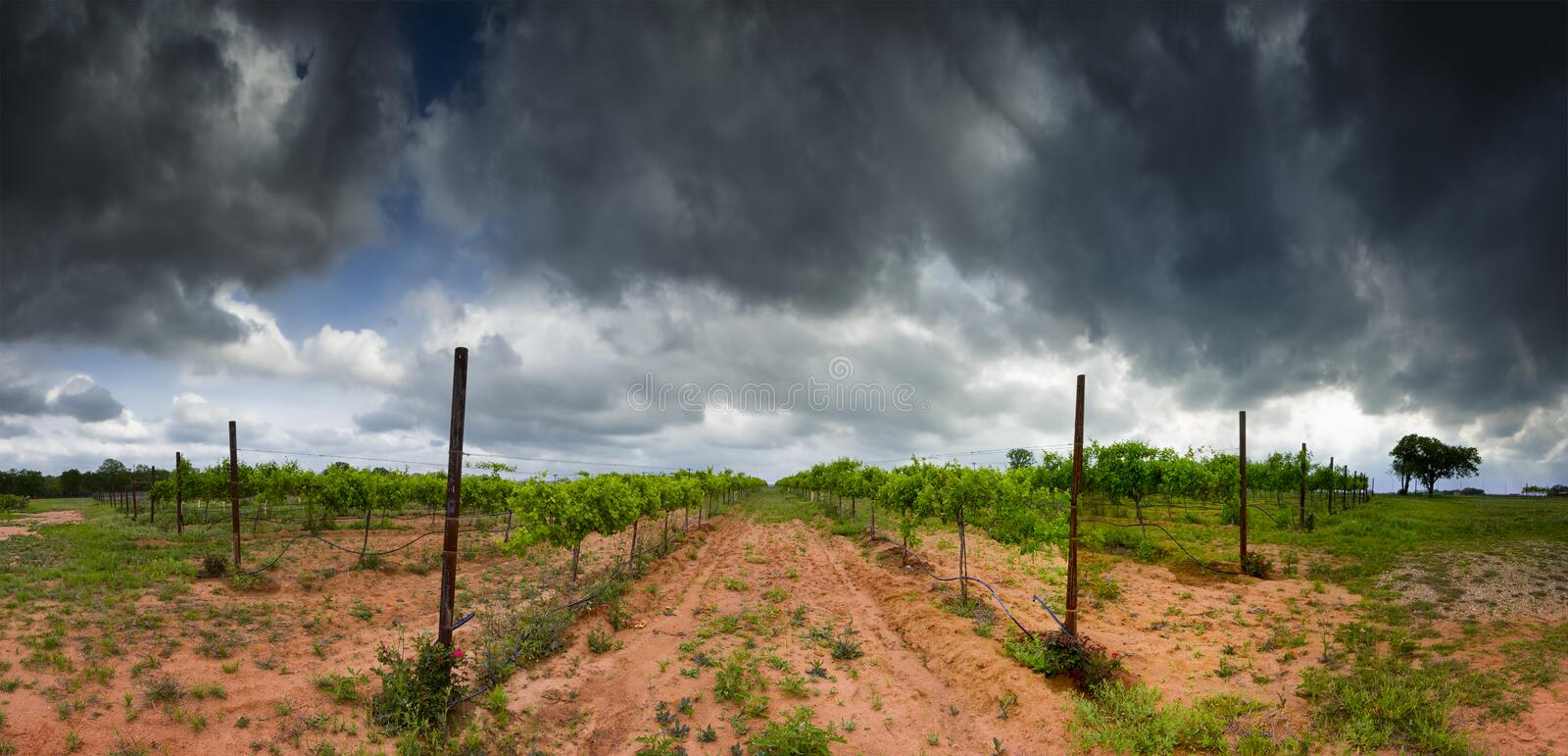 Texas Hill Country Vineyard stockfotografie