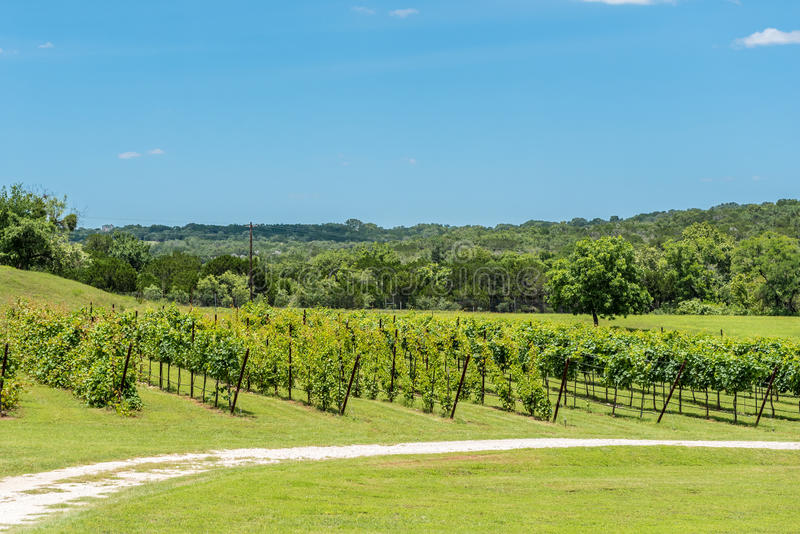 Texas Hill Country Vineyard fotografia de stock