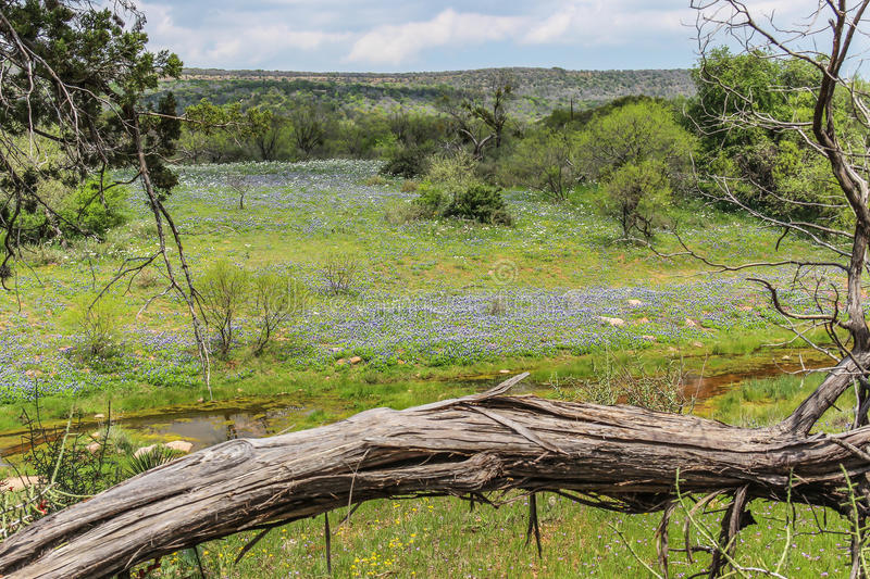 Texas Hill Country Wildflowers fotografia de stock royalty free