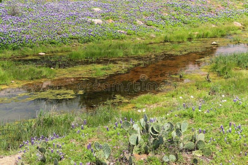 Texas Hill Country Wildflowers fotografia stock