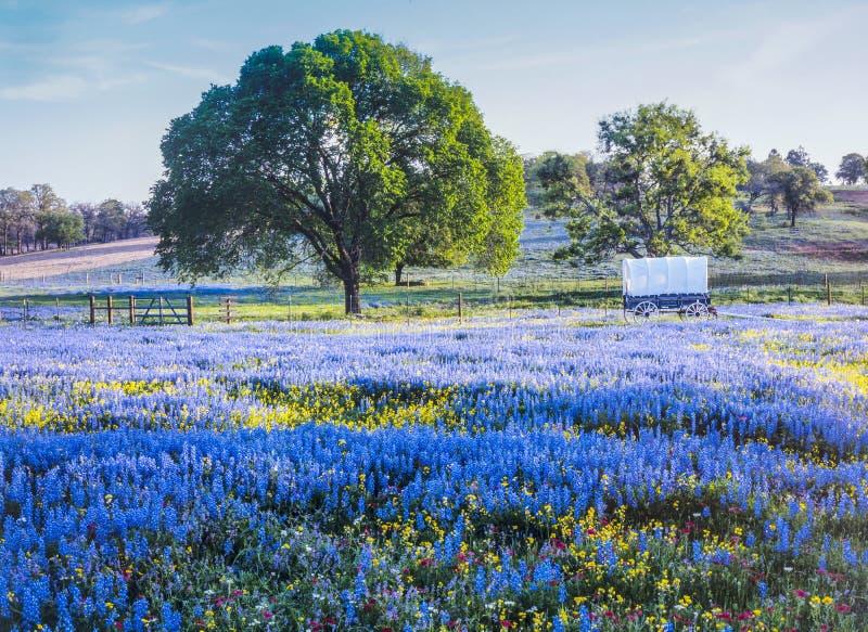 Texas Hill land i vår arkivbilder