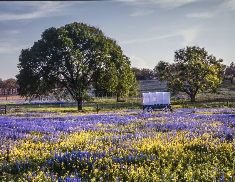 Texas kulleland arkivfoton