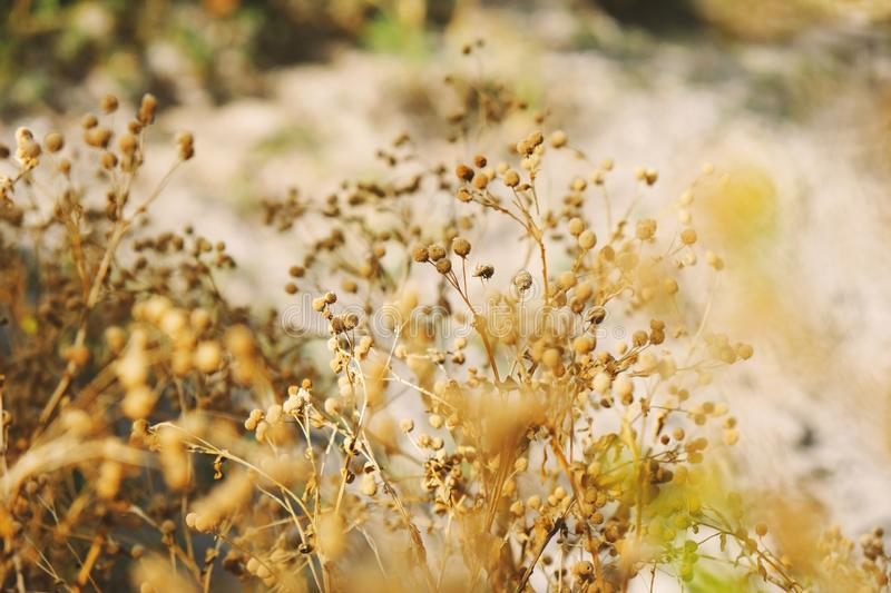 Texas plants in landscape. Native Texas plants in dry landscape closeup royalty free stock image