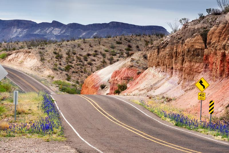 Texas Roads in the Spring. Blooming bluebonet. Big Bend Ranch, State Park royalty free stock photos
