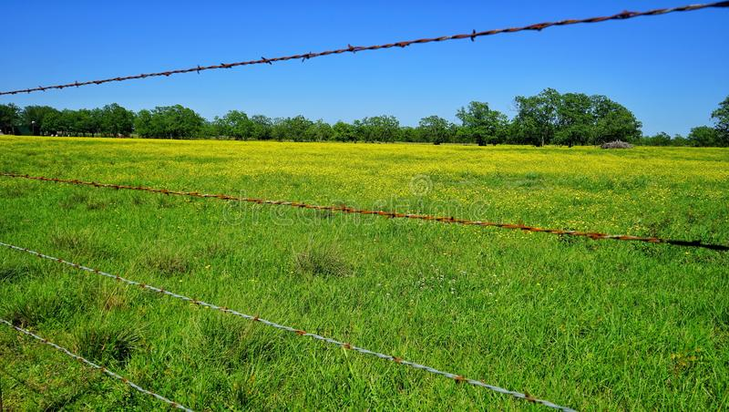 Texas spring flowers and barbed wire. Field of yellow flowers blooming in the springtime in Texas. Rusty barbed wire fence royalty free stock photo