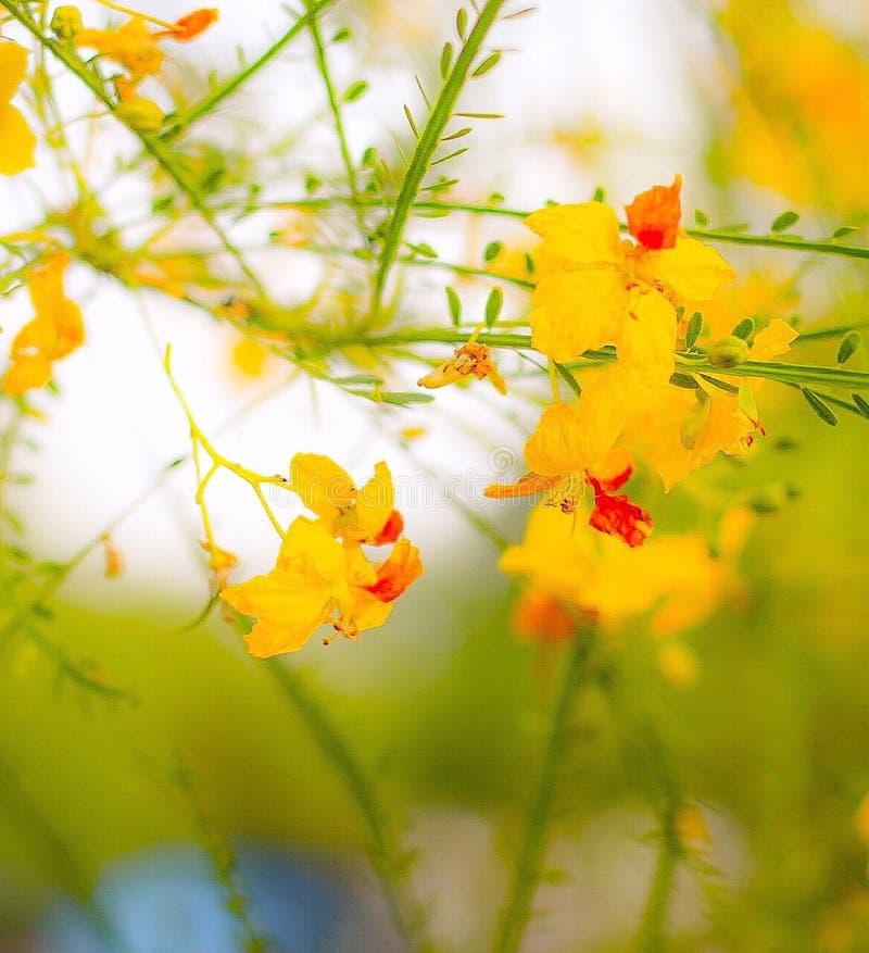Texas Wildflowers image stock