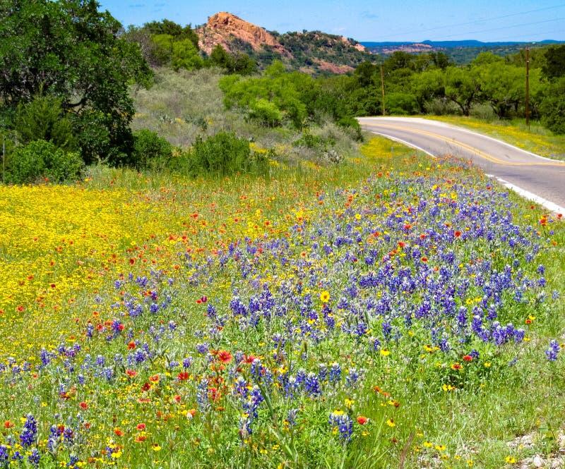 Texas Wildflowers Enchanted Rock foto de stock royalty free