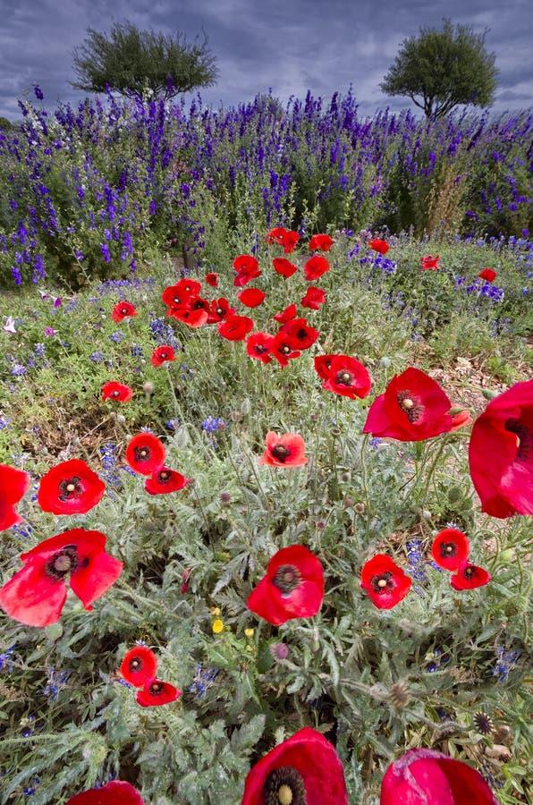 Texas Wildflowers Under um céu nebuloso imagens de stock royalty free