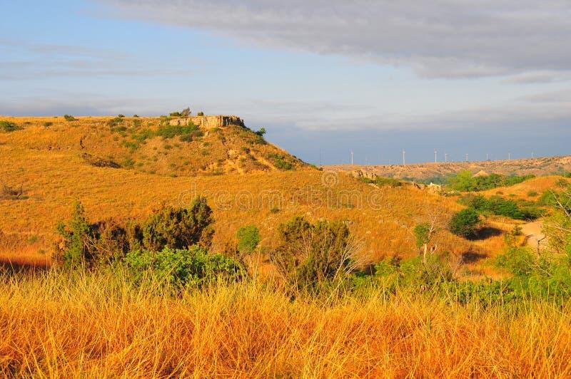 Texas Windmills avec le ciel bleu et les vagues d'or des herbes indigènes image libre de droits