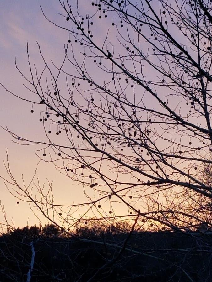 Texas winter sunset pecan trees stock photos