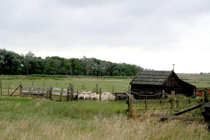 Texel jordbruks- landskap arkivfoton