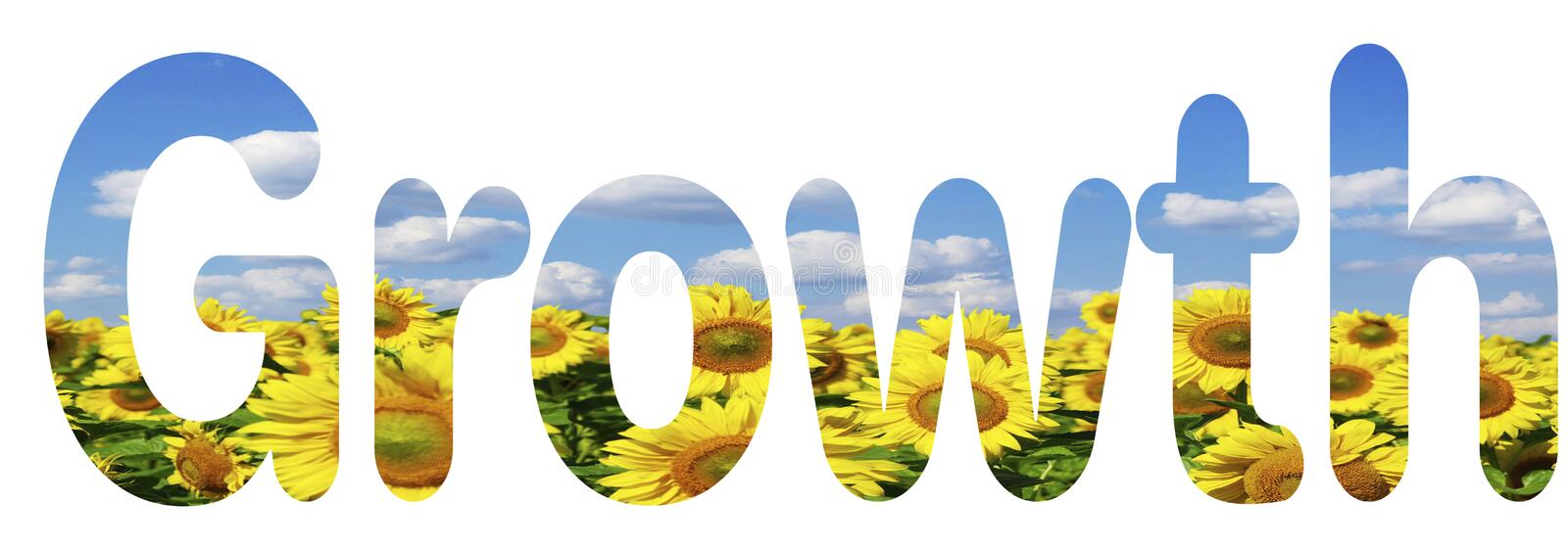 Text graphic for growth with sunflowers. Text graphic showing the word growth with sunflowers in the background and blue skies. Can be used for business royalty free stock photography