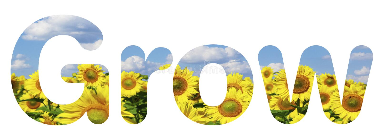 Text graphic for grow with sunflowers. Text graphic showing the word grow with sunflowers in the background and blue skies. Can be used for business, financial stock photos
