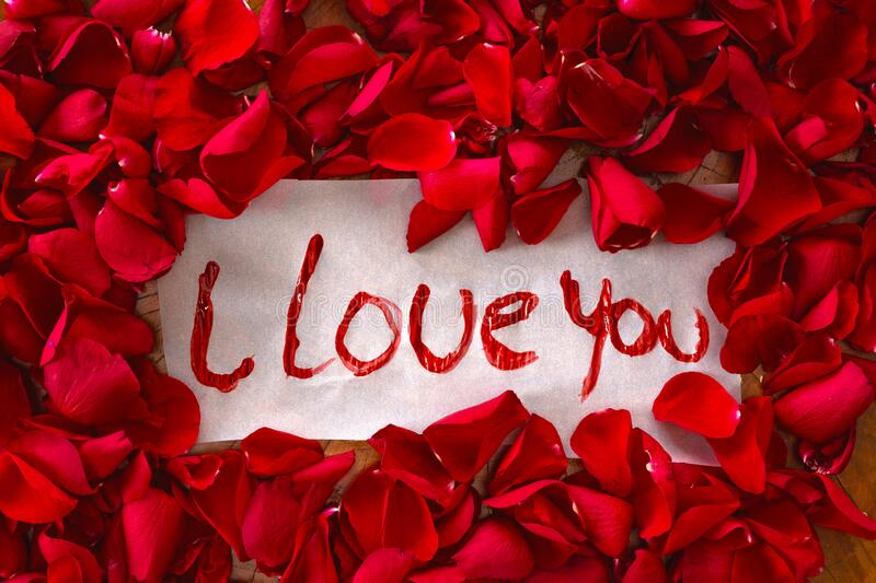 1 518 I Love You Rose Photos Free Royalty Free Stock Photos From Dreamstime