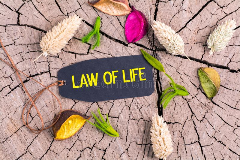 The text law of life in tag. The text law of life in black tag on cracked tree stump with dried color flowers royalty free stock photos