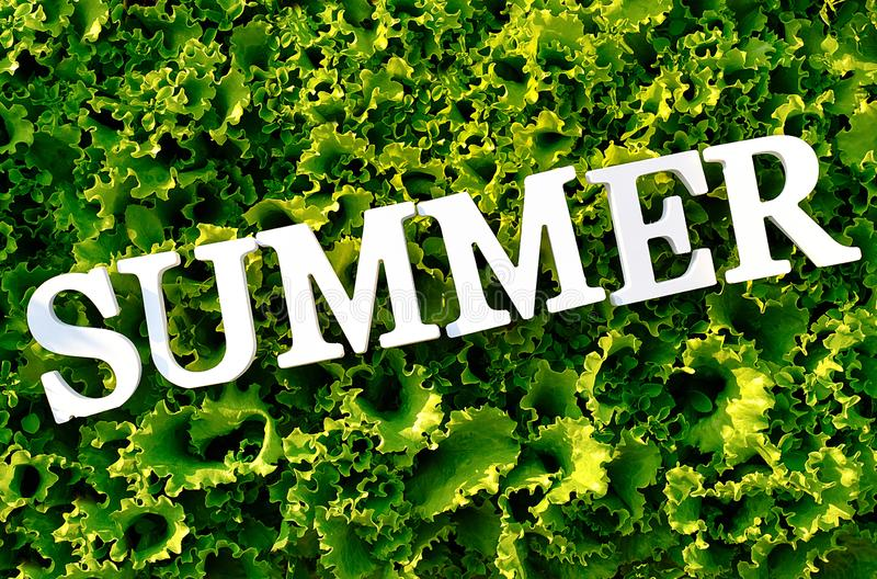 Text Summer from white letters on curly green lettuce. Concept diet, detox time, summer menu, healthy food. Top view stock photos