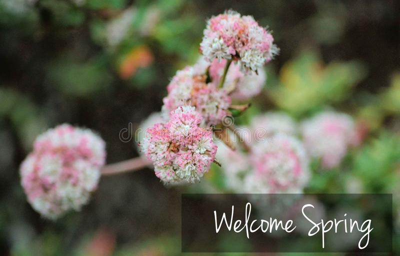 Text Welcome Spring Outdoors royalty free stock photography