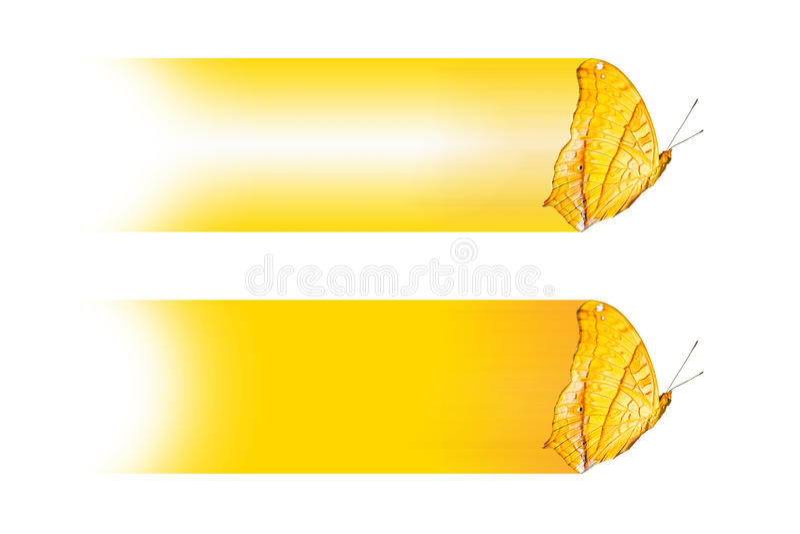 Textboxdesign mit Schmetterling das Kreuzer Vindula-dejone erotella, Isolat auf Weiß lizenzfreie abbildung