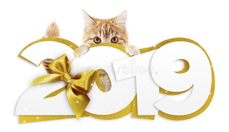 Texte de la bonne année 2019 d'apparence de chat de gingembre avec le ruban d'or b image stock