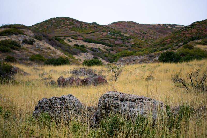 Textilkaufmann Utah Mountainside mit Autumn Colors im Laub lizenzfreie stockfotos