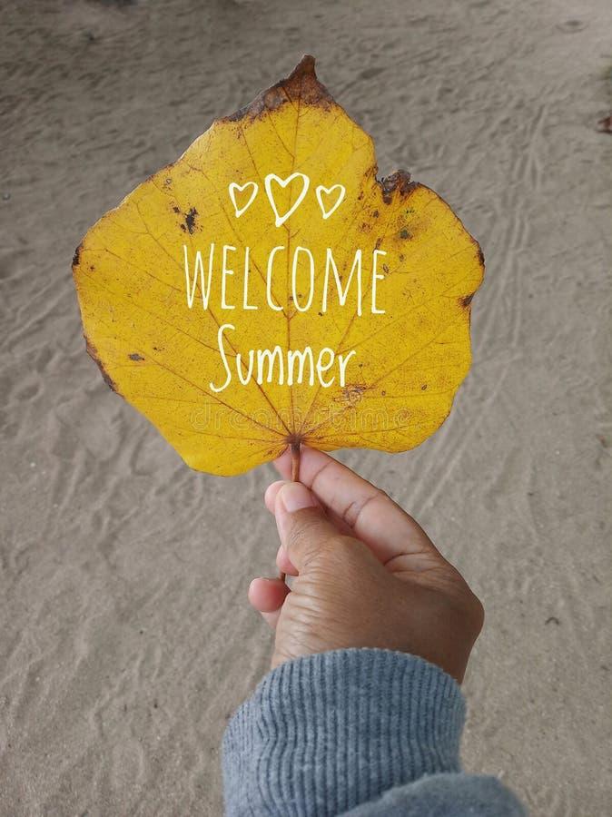 Texto bem-vindo do verão em uma folha do outono na cor amarela Uma mão da jovem mulher guarda a folha, fundo branco das areias Pa imagens de stock