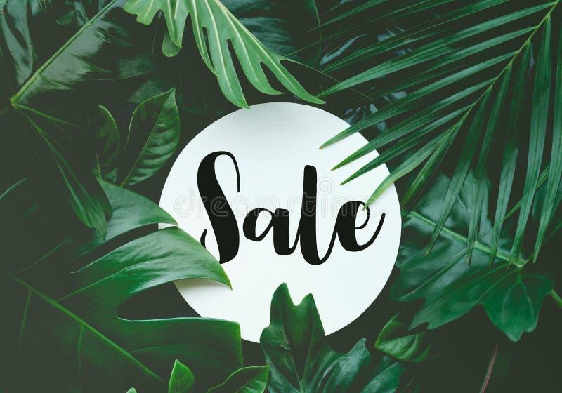 Texto de la venta con el fondo tropical de la selva de las hojas reales foto de archivo